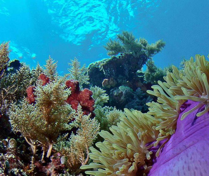 Die Farbenpracht der Unterwasserwelt von Palau entfaltet sich bereits wenige Meter unter dem Meeresspiegel.