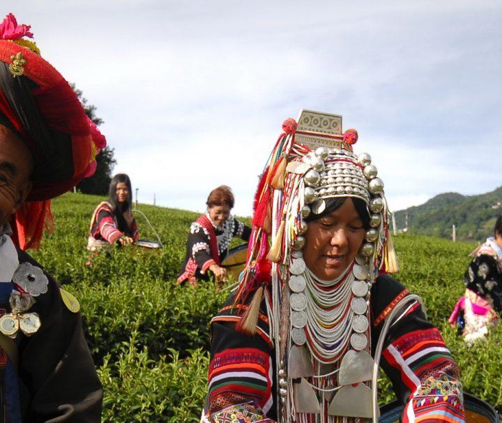 An den zahlreichen Teeplantagen in Chiang Rai haben sich viele Völker der Bergstämme angesiedelt.