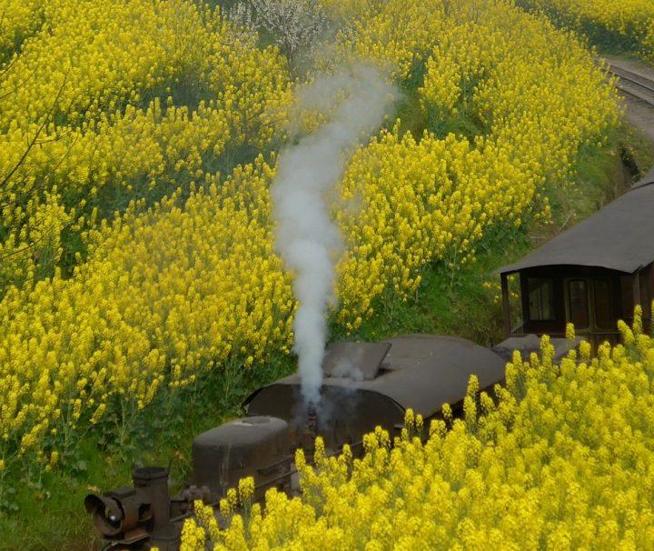 Dampflok Zug der Jiayang Schmalspurbahn fährt eine 20 km langen Schmalspurbahnstrecke vor schon seit 50Jahre bis heutzutage.