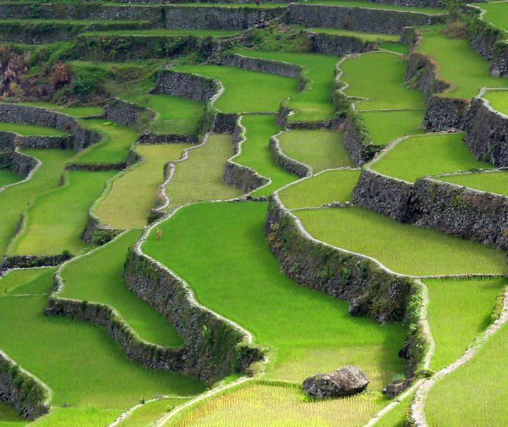 Die Zentralebene von Luzon mit schier endlos erscheinenden Reisfeldern, ist das größte Reisanbaugebiet der Philippinen.