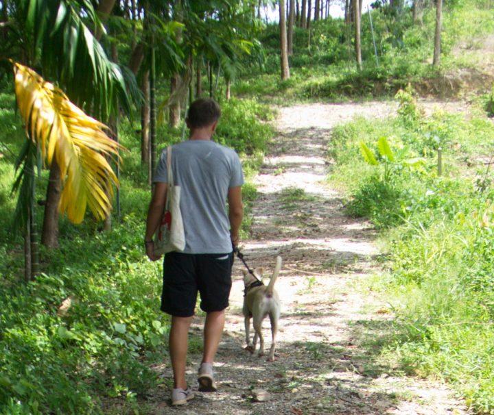Die Hunde vom Lanta Animal Welfare freuen sich über Freiwillige die mit ihnen Gassi gehen