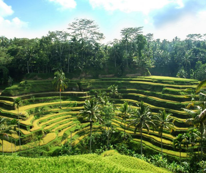 Die bewässerten Reisterrassen prägen die Landschaft von Bali und sind fast überall, außer im trockeneren Westen der Insel zu finden.