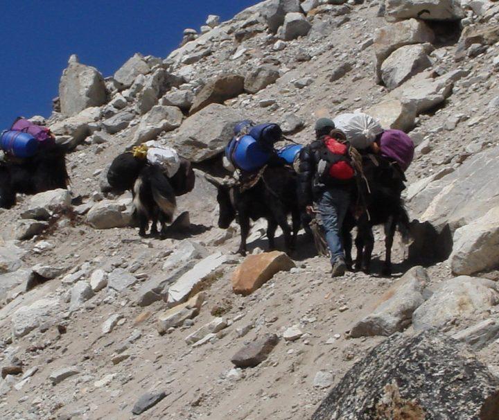 Bei einer Trekkingtour in Nepal können Reisende die beeindruckende Bergwelt des Himalayas hautnah erlebn.