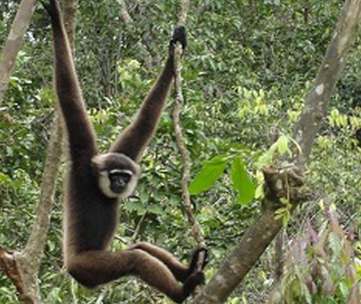 Tanjung Puting National Park in Kalimantan