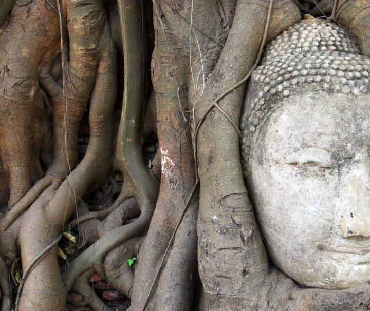 Der Wat Mahathat Tempel steht im Geschichtspark Sukhothai und ist mehrere Hundert Jahre alt.